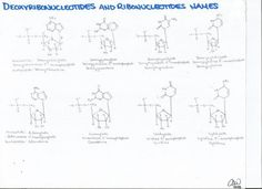 Deoxyribonucleotide and Ribonucleotide Names