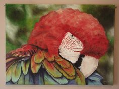 Large Macaw Parrot Painting in Water Based Oil Paints on Canvas by Suzie Nichols - pinned by pin4etsy.com