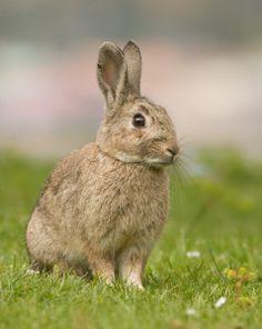 Big Easter Bunny Egg Hunt & Nature Trail (for children ages 4-12) - Denmark Farm Conservation Centre