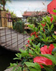 WEBSTA @ sapatiko - 💕🍃💕 #flor #jardim #garden #flowers #azaleia