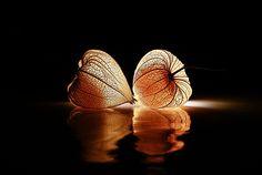 Licht by Christine Ellger on 500px
