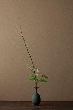 2012年6月4日(月)    古代の乙女のような花。昔、山辺の道で出会ったときは感激しました。   花=野茨(ノイバラ)、蘿芋(ガガイモ)   器=青銅王子形水瓶(六朝時代)