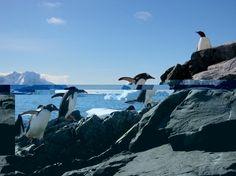 See penguins in Antarctica