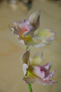 Orchid; handmade gum paste flower. Tania Ataoellah-Henriquez Sugar flower Artist. www.thesweetestsin.nl