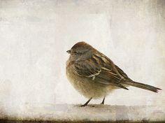Winter Visitor   ♥ the winter birds   Pamela Schmieder   Flickr