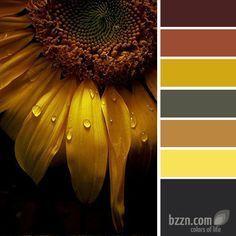 Colour Pallette, Color Palate, Colour Schemes, Color Combinations, Sunflower Colors, Design Seeds, Color Swatches, Pantone Color, Color Theory