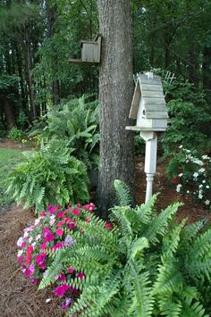 A lovely combo of ferns, impatiens and birdhouses/like the pine needle path and huge ferns