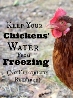 Frustrated with your chickens' water constantly freezing during the winter months? Here are some old fashioned ways to keep your chickens' water from freezing. How To Keep Your Chickens' Water From Freezing | areturntosimplicity.com