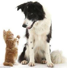 cão gato animais fotos engraçadas                              …