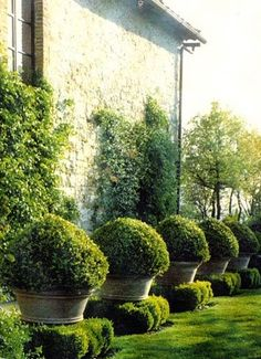 Formal Garden with Terra cotta Pots and Boxwoods, lining a French Limestone Country Home.