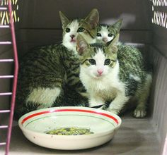 Animals will be blessed at St. Luke's Cathedral on Sunday at 4 p.m.