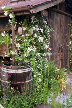 rain barrel - love the plants all around. need to do this to our barrel.