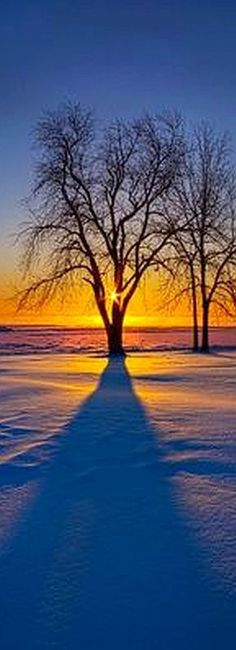 COLD ..... sunset winter snow #reflection shadow blue tree landscape nature amazing #photo by Phil Koch on flickr