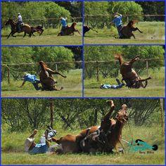 Horse and Rider okay...Pasture roping mishap