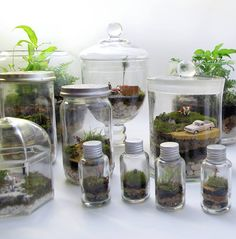 Petite Green – Terrariums • Available at thebigdesignmarket.com