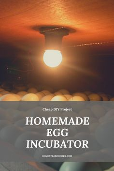 Do you want to build your very own hatching incubator for your eggs? Luckily, here are some ways to create a homemade egg incubator.