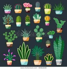 Set of cactus and succulents in pots. Indoor plants in a flat style. Set of cactus and succulents in pots. Indoor plants in a flat style. Succulents Drawing, Cactus Drawing, Cactus Art, Cactus Decor, Big Indoor Plants, Indoor Plant Pots, Little Plants, Indoor Garden, Succulent Pots