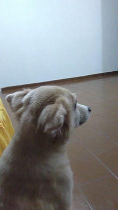 #bandido #dog