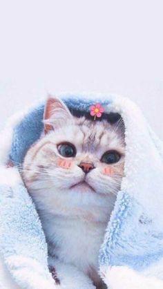 Cute Cartoon Animals Clipart beside Cute Funny Baby Animals Videos . Cute Cartoon Animals, Cute Baby Animals, Baby Cartoon, Cute Cats And Kittens, Kittens Cutest, Kittens Meowing, Cute Cat Wallpaper, Travel Wallpaper, Wallpaper Ideas