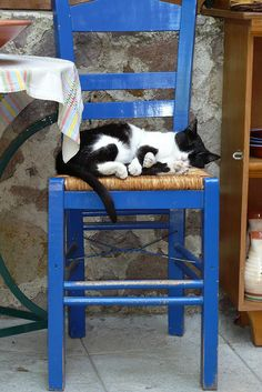 Greek cats by Jacqueline Clowting, via Flickr. Corfu travel guide by Corfu2travel.com