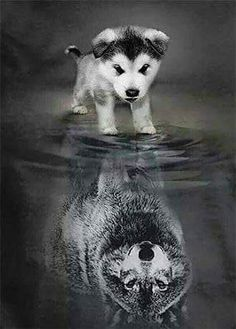 Little Puppy Reflection Diamond Painting - Square 50x60cm