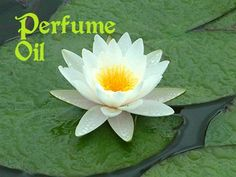 Water Lily and Jasmine Roll On Perfume Oil - From the Alder Moon Bath & Body product line by TheCarolinaTrader on Etsy