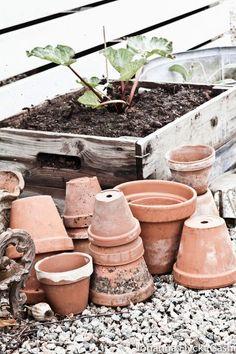 I spy rhubarb. Garden Urns, Garden Planters, Garden Tools, Japanese Garden Backyard, Inside Garden, Vintage Gardening, Farmhouse Garden, Backyard Farming, Edible Garden