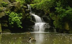 central park waterfall - Google Search