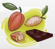 Proceso del cacao por Román Vélez
