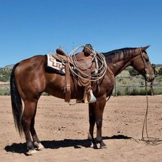 6 Year Old Cowhorse Own son of Dual Rey for Sale - For more information click on the image or see ad # 39130 on www.RanchWorldAds.com