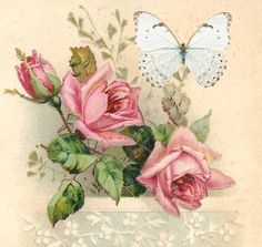 roses and butterfly    T.H.