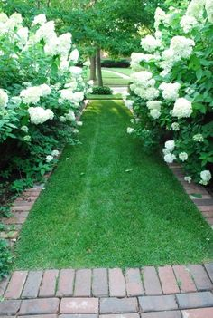 this pretty white hydrangea allee is from designer Loi Thai's pinterest board of white gardens.