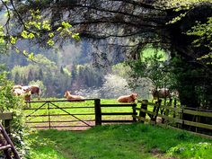 *Green pasture