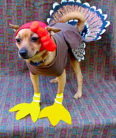 This pensive one, complete with little turkey feet. | 17 Dogs Dressed As Turkeys