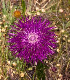 Pretty purple flower.