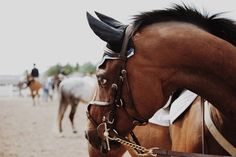 e q u i n e English Riding, Horse Photos, Horse Photography, Equestrian, Horses, Pure Products, Animals, Life, Pictures Of Horses