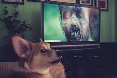 My Corgi won't like scary movies either, @aaron bowersock
