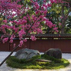 Reiun-in temple. Zen Rock Garden, Japanese Garden Design, Kyoto, Plants, Instagram, Plant, Planets