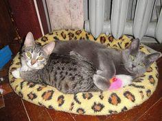 «Шерстью можно было бы выложить Дворцовую площадь»: как живут петербуржцы, у которых много котов. «Бумага» Lynx, Cats, Animals, Gatos, Animales, Animaux, Animal, Cat, Animais