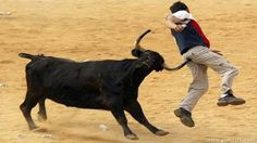 Angry Bulls attacking people Best funny video Only