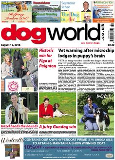 This week's Dog World #newspaper #dogs #dogshows #dogshowing #August12 #2016 #showdog #Whippet #Pointer