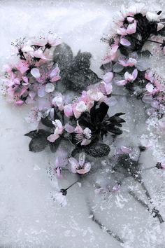 More Frozen Pink Flowers