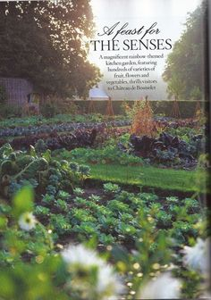 french potager garden | French potager Chateau de.....oh my goodness!!!
