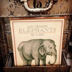 For the love of elephants, Paris market