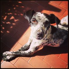Daisy <3 my guest