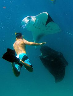 Come to #Anantara Dhigu Resort & Spa in #Maldives in May when the Manta Ray Migration to our waters for some amazing eperiences