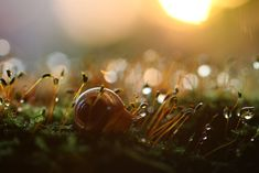 Prší nebo svítí slunce, Makro fotografie Vadim Trunov - LaMansion.