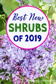 These gorgeous new varieties of perennials and shrubs will definitely add some beautiful flowers to your garden this summer. These gorgeous new varieties of perennials and shrubs will definitely add some beautiful flowers to your garden this summer. Lilac Bushes, Plants, Part Shade Perennials, Perennials, Shrubs, Fragrant Flowers, Garden Vines, Perennial Shrubs, Perennial Garden