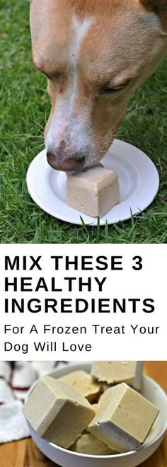 Healthy Dog Treats Mix these 3 ingredients for an easy, DIY, homemade dog treat that your pet will love. This frozen peanut butter and banana treat recipe will even keep your dog cool when it gets warm outside! Puppy Treats, Diy Dog Treats, Healthy Dog Treats, Banana Dog Treat Recipe, Dog Treat Recipes, Dog Food Recipes, Frozen Dog Treats, Dog Biscuit Recipes, Dog Cookies