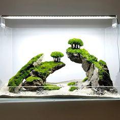 10 Tips on Designing a Freshwater Nature Aquarium Aquarium Garden, Aquarium Landscape, Nature Aquarium, Planted Aquarium, Aquarium Fish, Moss Terrarium, Garden Terrarium, Fish Tank Terrarium, Nano Cube